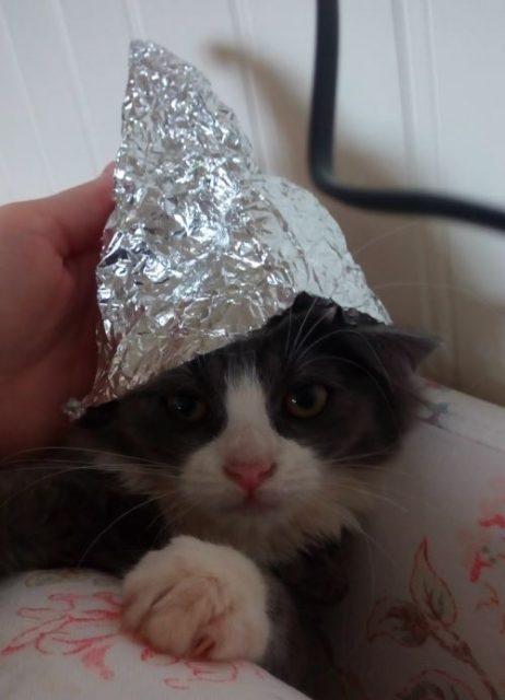 Kattlaug med lue av aluminiumsfolie