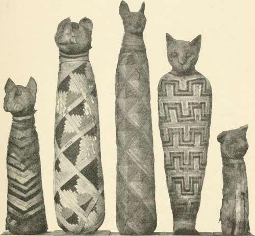 Mumifiserte katter