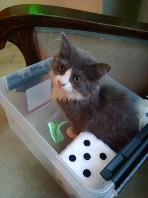 Katt sitter i en plastboks, ved siden av en plysjterning som viser fem øyne.